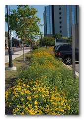 Infiltration swale at Macomb County's office building.
